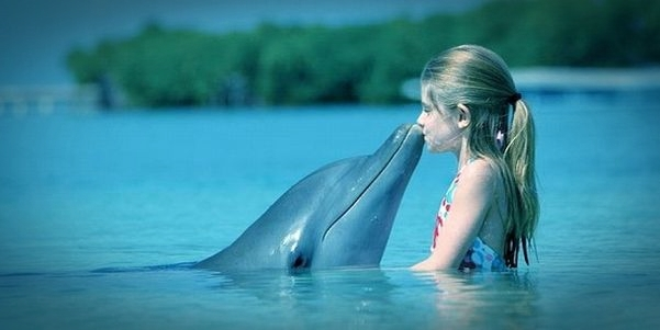 Dupin, Dolphin, More, Sea